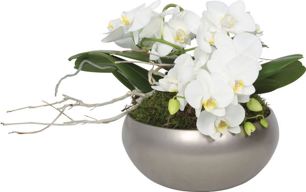 orhidee_craciun2